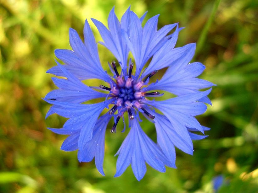 Фотогаллерея флоры