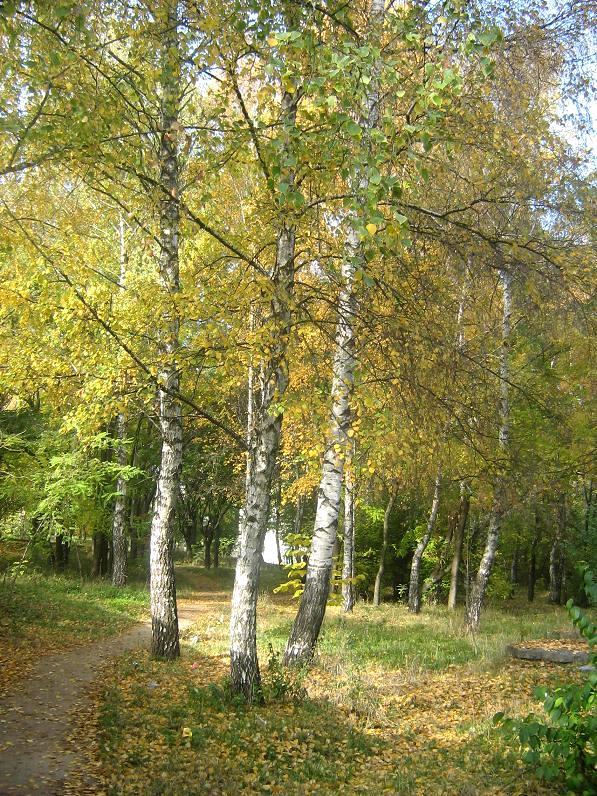 Дома и на даче золотая осень toamna de aur